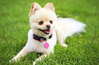 Dog Daycare & Boarding
